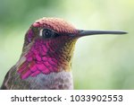 hummingbird portrait and macro | Shutterstock . vector #1033902553