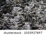 fir tree limbs. | Shutterstock . vector #1033927897