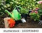 flowers in pot before planting... | Shutterstock . vector #1033936843