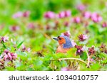 singing bird sits in the spring ... | Shutterstock . vector #1034010757