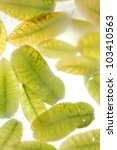 green leaves in ice background | Shutterstock . vector #103410563