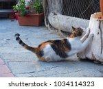 Orange And White Cat Stretchin...