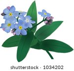 forget me not. | Shutterstock . vector #1034202