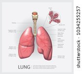 lung with detail vector... | Shutterstock .eps vector #1034255257