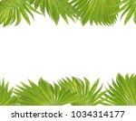 green palm leaf on white... | Shutterstock . vector #1034314177