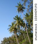 palm trees over blue sky... | Shutterstock . vector #1034409193