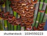 bamboo island mushroom    Shutterstock . vector #1034550223