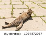 striped cat on the street.  | Shutterstock . vector #1034572087