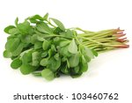 purslane (Portulaca oleracea) on a white background - stock photo