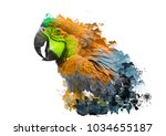 parrot with abstract paint on... | Shutterstock . vector #1034655187