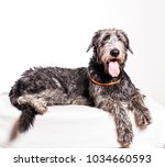 large scottish deerhound dog... | Shutterstock . vector #1034660593
