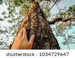placed on the trunk of a big... | Shutterstock . vector #1034729647