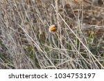 robin bird erithacus rubecula | Shutterstock . vector #1034753197