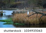 Small photo of Aviary Fowl and Swamp Landscape, Crane from alternate angles, Flying and Resting Birds, Wetlands.