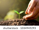 seedlings are growing from...   Shutterstock . vector #1034945293