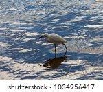 a beautiful graceful white...   Shutterstock . vector #1034956417