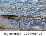 a beautiful graceful white...   Shutterstock . vector #1034956423