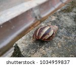Small photo of Snail indent on concrete cement