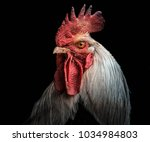 A Portrait Of A Rooster
