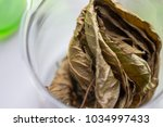 science research leaves of... | Shutterstock . vector #1034997433