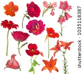 set of red flowers isolated on... | Shutterstock . vector #1035118387