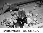 black and white lucky stars and ... | Shutterstock . vector #1035314677