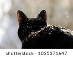 a black cat looks at the street ...   Shutterstock . vector #1035371647