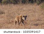 spotted hyena walking | Shutterstock . vector #1035391417