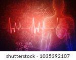 2d illustration  anatomy of...   Shutterstock . vector #1035392107