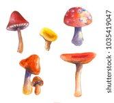 bright watercolor mushroom set   Shutterstock . vector #1035419047