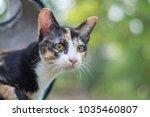 Stock photo the cute cat in morning cute cat alone cat sad kitten cat 1035460807