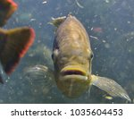 Small photo of Fish in murky water