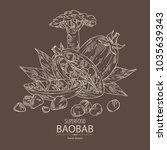 baobab  baobab fruit  seeds ... | Shutterstock .eps vector #1035639343