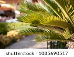 palm trees leaves  palm trees... | Shutterstock . vector #1035690517