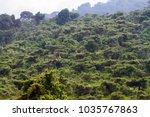 giraffe  giraffa   african even ...   Shutterstock . vector #1035767863