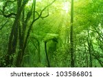 Mossy forest, cameron highlands Malaysia - stock photo