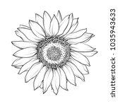 Sunflower Isolated On White.