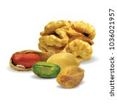 fresh walnut  nutritious... | Shutterstock .eps vector #1036021957