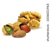 fresh walnut  nutritious... | Shutterstock .eps vector #1036021963