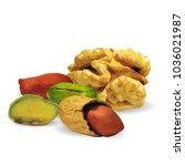 fresh walnut  nutritious... | Shutterstock .eps vector #1036021987
