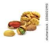fresh walnut  nutritious... | Shutterstock .eps vector #1036021993