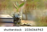 plant growing out of coins in... | Shutterstock . vector #1036066963