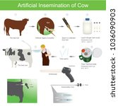 artificial insemination is a... | Shutterstock .eps vector #1036090903