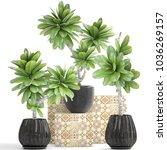 3d illustration frangipani tree | Shutterstock . vector #1036269157