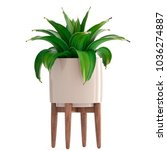 3d illustration agave   Shutterstock . vector #1036274887