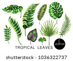 tropical realistic palm ...   Shutterstock .eps vector #1036322737