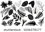 black icons of tropical leaves. ... | Shutterstock .eps vector #1036378177