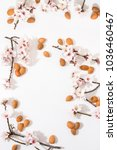 almond tree branch with almonds ... | Shutterstock . vector #1036460467