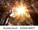 golden heaven light hope... | Shutterstock . vector #1036618837