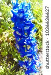 delphinium larkspur flowers | Shutterstock . vector #1036636627